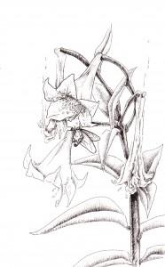Phoenix Lily by Becca Bean